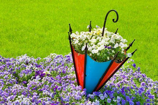 charakter, kwiaty, Kwiat, parasol, LATO.