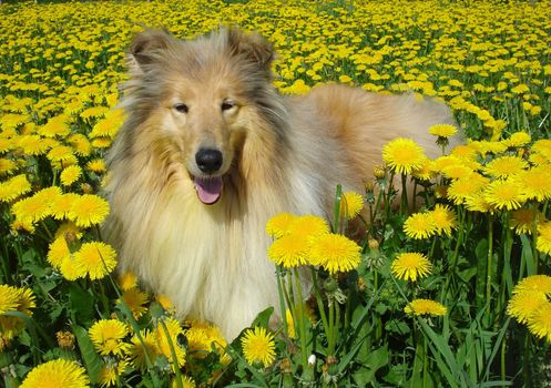 Animals, animal, dogs, dog, flowers