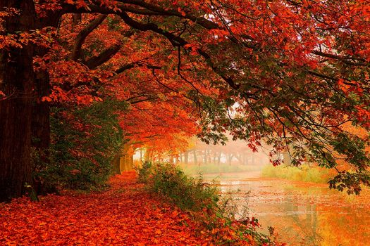 HDR, leaves, water, forest, river, nature, trees, autumn, walk
