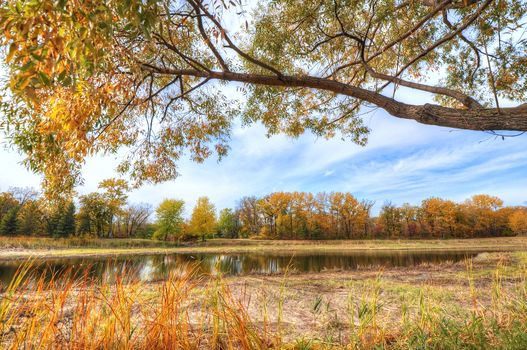 autumn, trees, park, pond, landscape