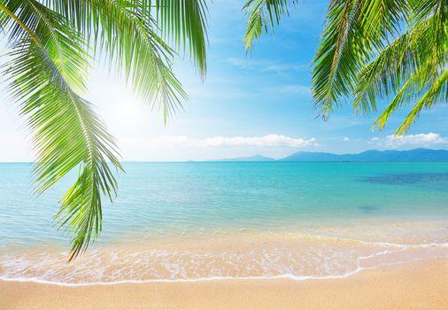 landscape, branch, Clouds, sky, nature, palm tree, sea