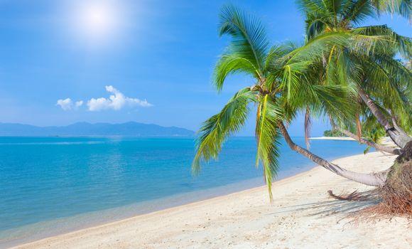 sunlight, sea, Clouds, coconut palm, sky, nature, tropical beach