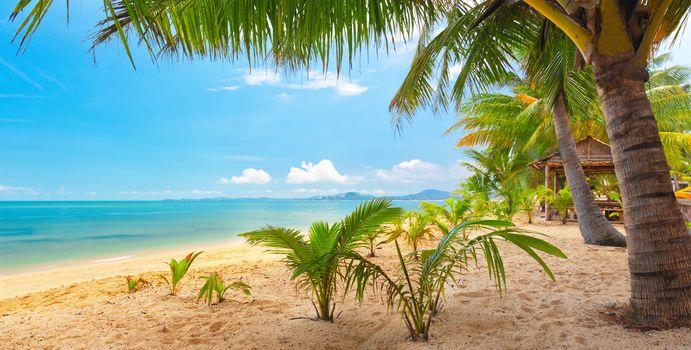 sand, sea, sky, palm trees, nature, Tropical, landscape, beautiful