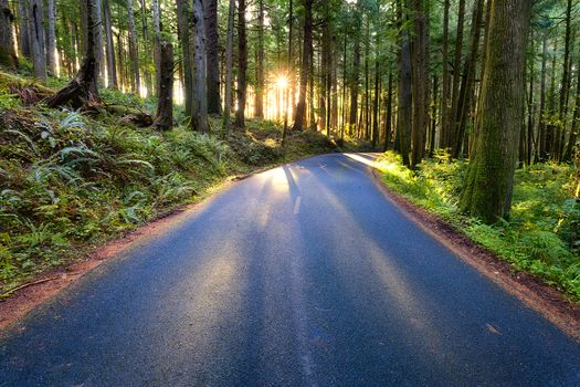 Forest Road, Oregon, forest, road, landscape