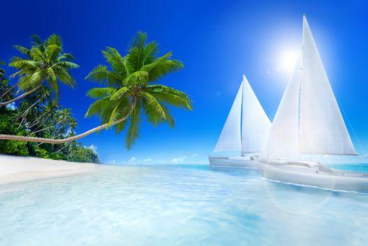 sea, tropics, recreation, beach, Palms, sailboats, sea, Tropics, holiday, beach, palm trees, sailboats