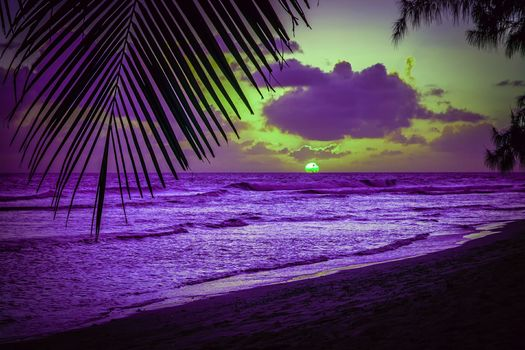 beach, Palms, Caribbean Sea, silhouette, list, sunset, evening, Barbados, sun