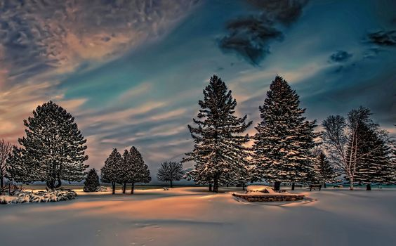 winter, snow, twilight, spruce, park