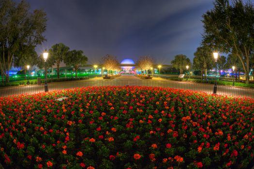 Disney, Plac, Kwiat