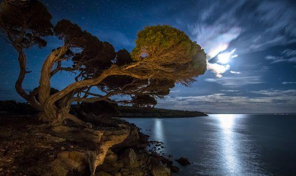 bay, Star, beach, night, tree, moonlight