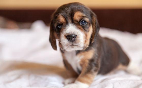 friend, dog, beagle, puppy, view