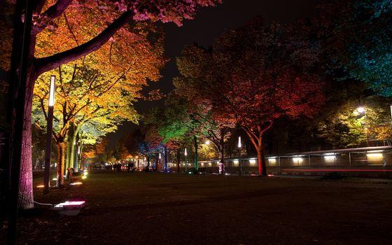 `` `` The Festival of Light, night, lighting, lights, Lamp, backlight, trees, Berlin, Germany, street, ALLEY, city