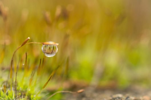 drop, blur, moss, dew, plant