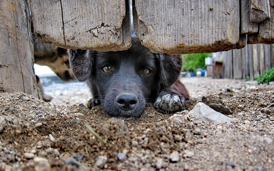 view, dog, friend