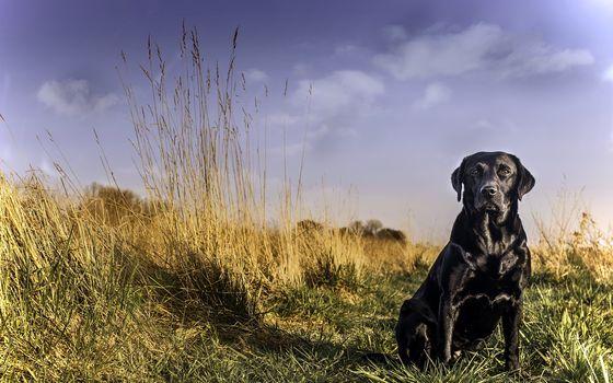 labrador, dog, friend, view