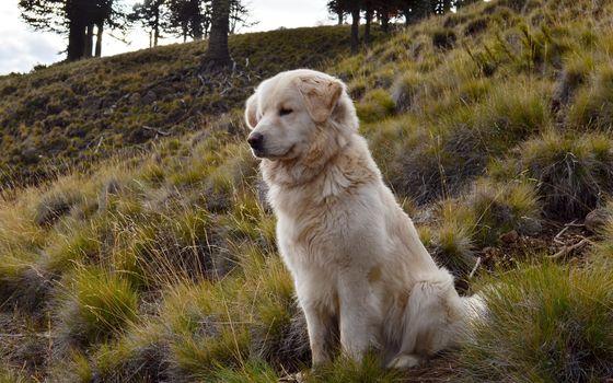 nature, dog, friend