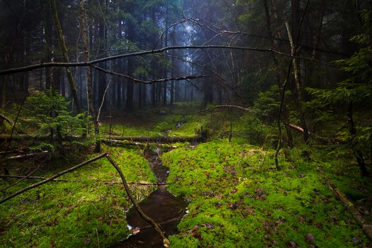 forest, moss, trees, creek, nature