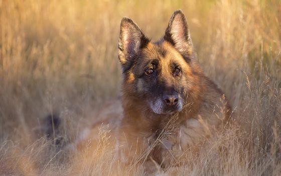 dog, friend, summer, view