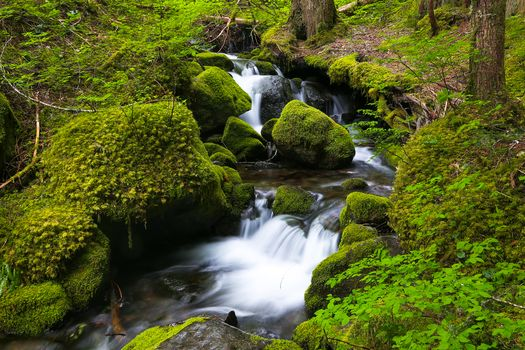 small river, moss, stones, trees, nature