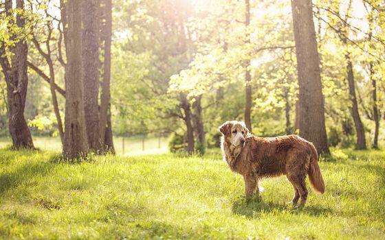 summer, friend, nature, dog