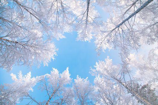 sky, trees, top