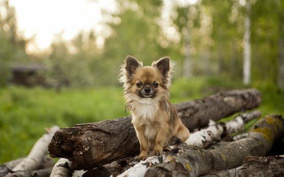 dog, view, friend