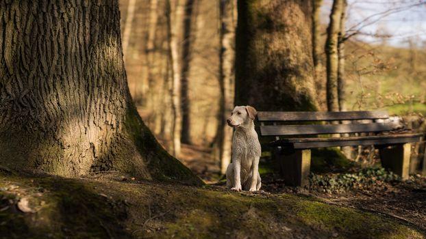 view, dog, tree, bench, friend