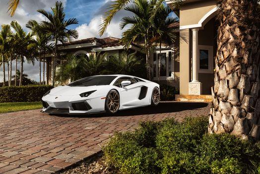 авентадор, белый, особняк, Lamborghini, ламборгини, пальмы, перед, ламборджини