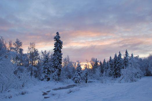 winter, river, forest, trees, landscape
