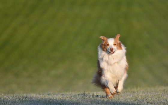 field, dog, friend