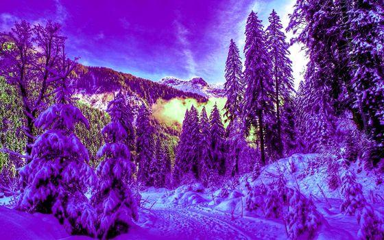 winter, forest, snow, spruce, landscape