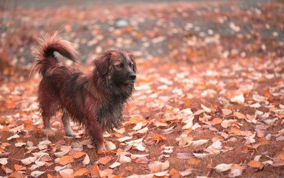 friend, dog, autumn
