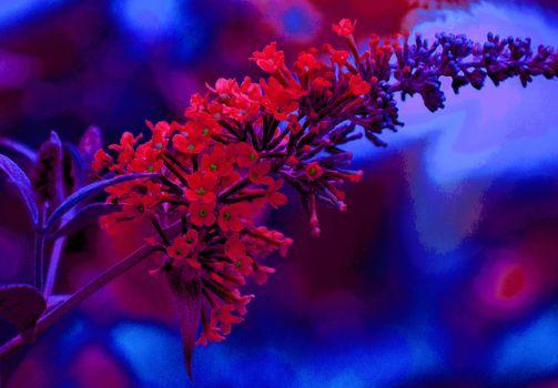 flower, stalk, Macro, flora