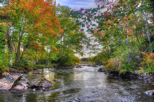 forest, trees, autumn, river, stones, landscape