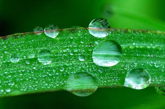 grass, dew, Macro