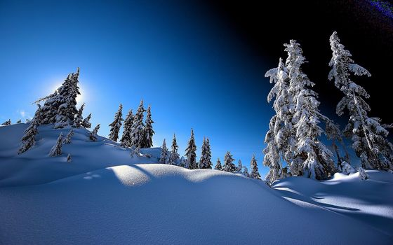 winter, trees, spruce, snow, landscape