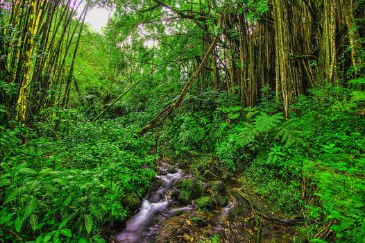 forest, small river, trees, nature