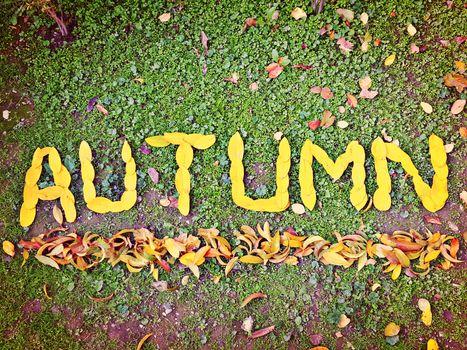 list, autumn, autumn