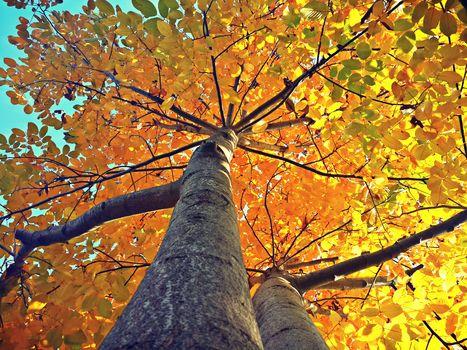autumn, list, tree, autumn, leaf