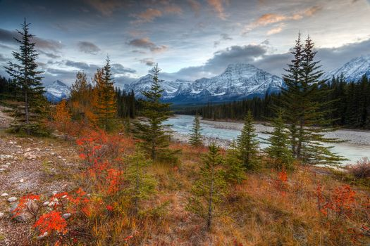 Autumn Vibrance, Athabasca River Valley, Jasper National Park
