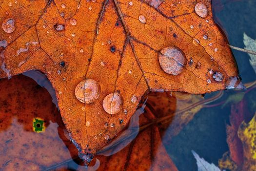 water, foliage, drops, autumn, Macro