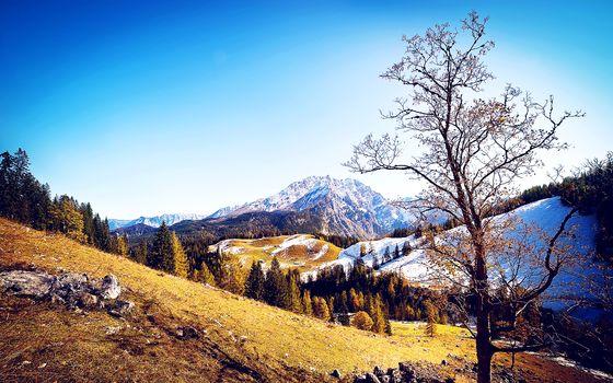 Mountains, autumn, trees, landscape