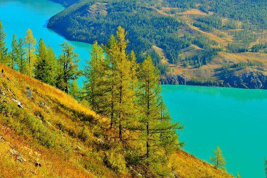 river, forest, trees, Hills, landscape