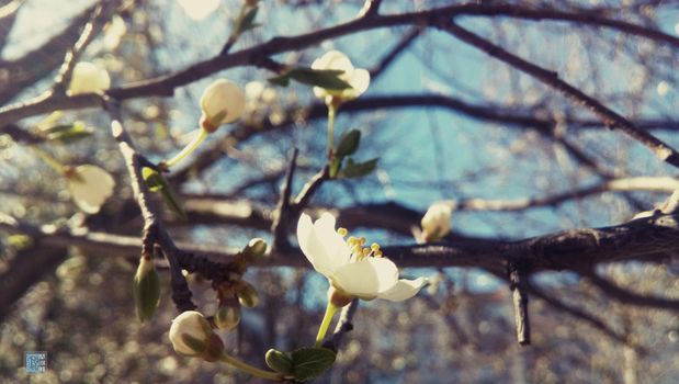 SPRING, color of the wood, Macro, cherry-plum, nature, BRANCH, Flowers, flowering, handsomely, Macro, spring, color of the wood, plum, nature, Branches, flowers, bloom, beautiful