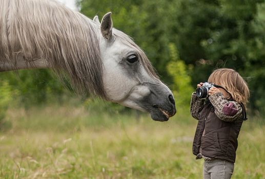 horse, horse, Snout, GRIVA, boy, photographer, Paparazzi, camera