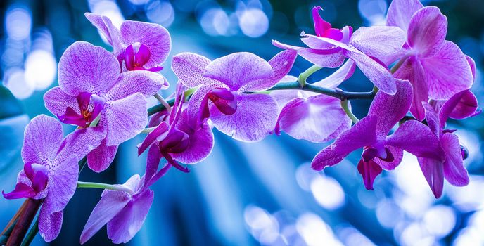 orchid, exotics, branch, Macro