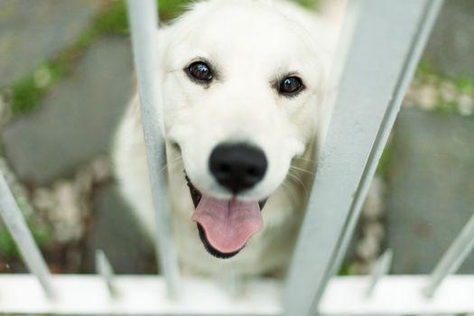 happy, white, dog