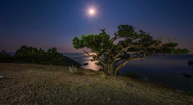 озеро, берег, ночь, луна, дерево, пейзаж