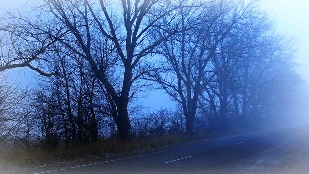 road, DAWN, fog, trees, landscape