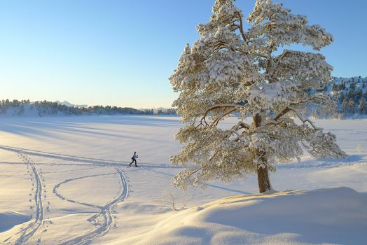 winter, lonely tree, skier, landscape