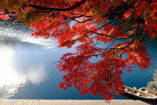 Lake Bishamon, Bandai, Fukushima, japan, Lake Bishamon, Bandai, Fukushima, Japan, lake, Boat, wharf, Japanese Maple, maple, BRANCH, autumn